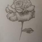 Рисую цветы